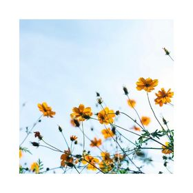 - - - 🌼 MOOD OF THE DAY 🌼 - - - Comme une envie de démarrer la journée avec des fleurs... 📷 @esquisselingerie . . . #moodoftheday #été #bouquetdefleurs #weekendmotivation #momentpresent #creatrices #fleurie #fleursdeschamps #plaisirsimple #moderesponsable #jadorelesfleurs